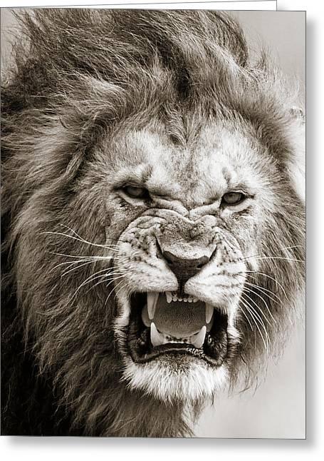 Male Lion I Masai Mara Kenya Greeting Card by Regina Mueller