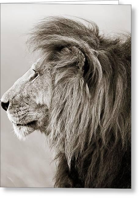 Male Lion IIi Masai Mara Kenya Greeting Card by Regina Mueller