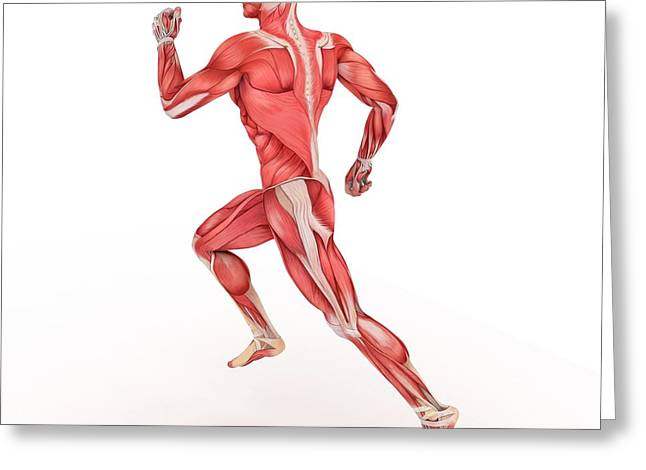 Male Muscles Greeting Card by Sciepro