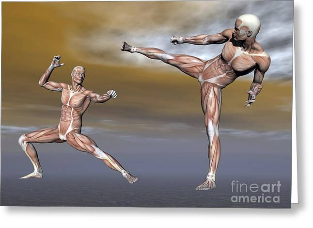 Male Musculature In Fighting Stance Greeting Card by Elena Duvernay