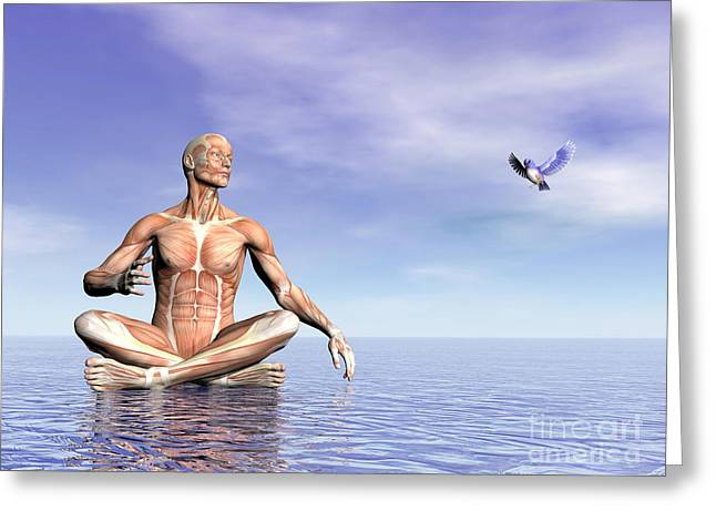 Male Musculature In Lotus Position Greeting Card by Elena Duvernay