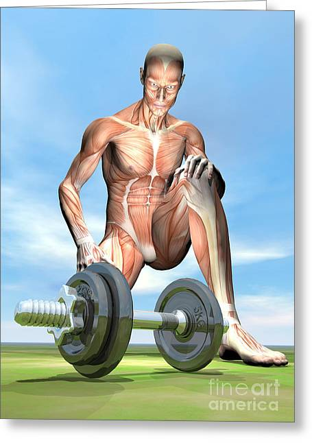 Male Musculature Looking At A Dumbbell Greeting Card by Elena Duvernay
