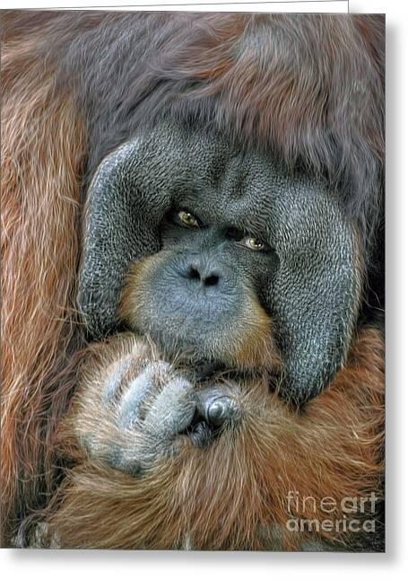 Greeting Card featuring the photograph Male Orangutan  by Savannah Gibbs