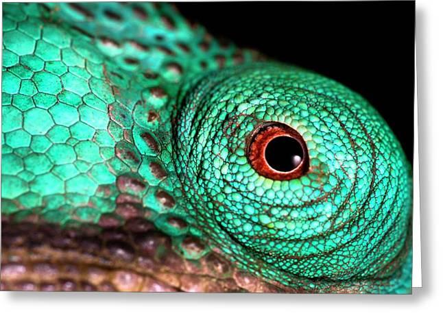 Male Parson's Chaemeleon Eye Greeting Card