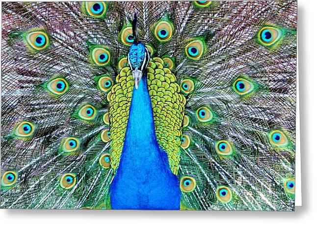Male Peacock Greeting Card