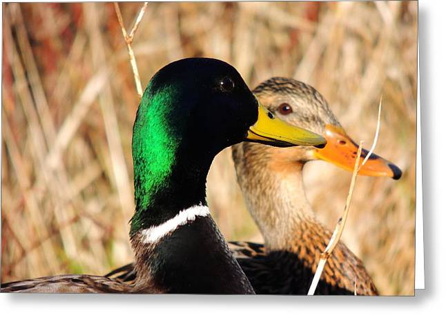 Mallard Couple Greeting Card by Karen Horn