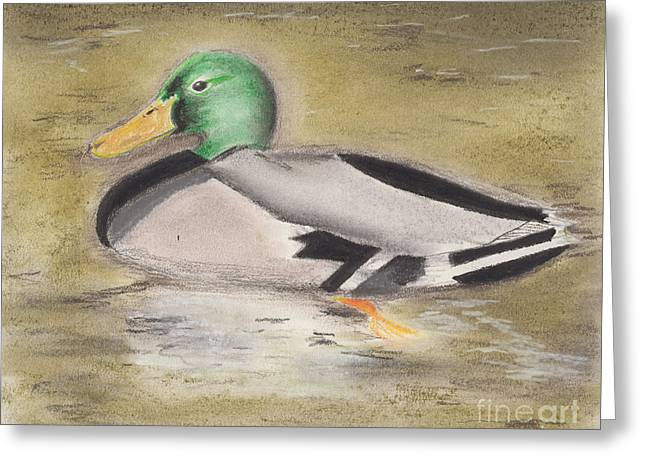 Mallard Greeting Card by David Jackson