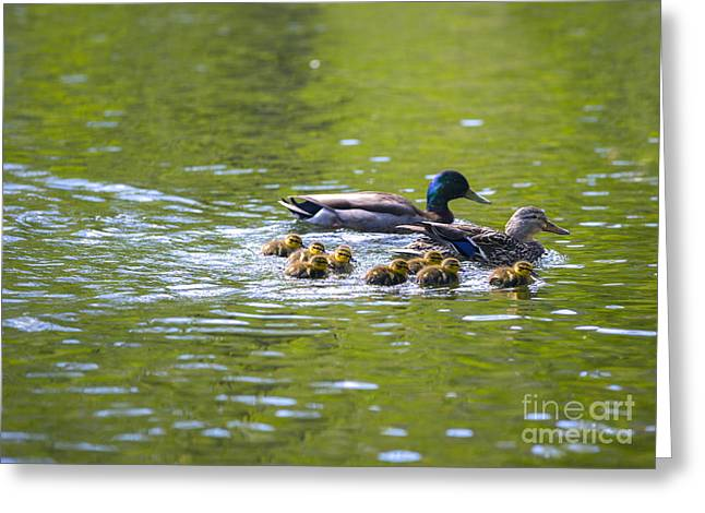 Mallard Duck Family Greeting Card