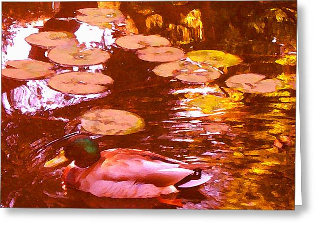 Mallard Duck On Pond 3 Square Greeting Card by Amy Vangsgard