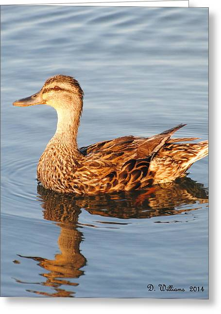 Mallard Hen Profile Greeting Card