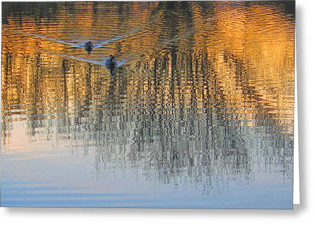 Mallard Pair At Kah Tai Lagoon Greeting Card