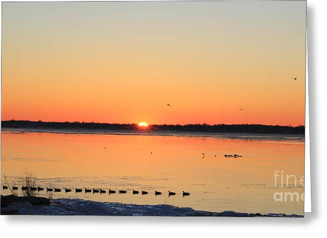 Mallards At Sunrise Greeting Card by David Jackson