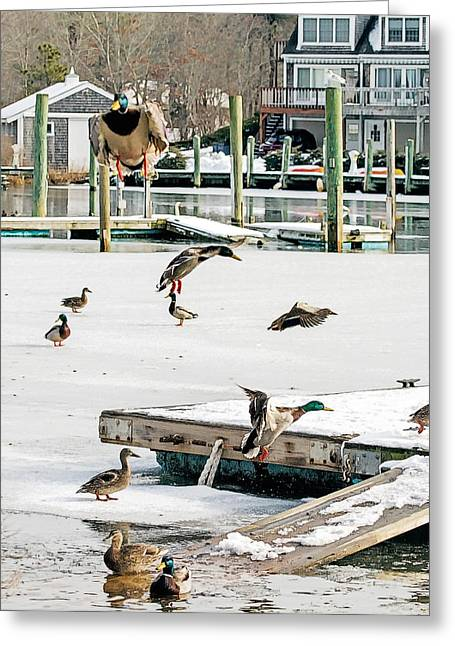 Greeting Card featuring the photograph Mallards In Motion by Constantine Gregory