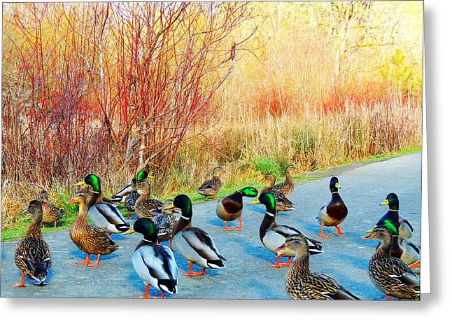 Mallards In The Park Greeting Card by Karen Horn
