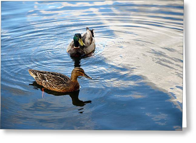Mallards Lake Hopatcong Nj Greeting Card