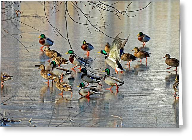 Mallards On A Frozen River Greeting Card