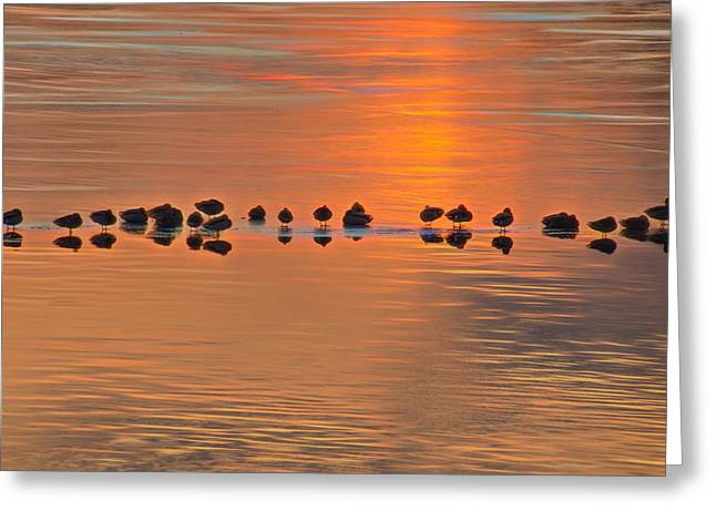 Mallards On Ice Edge During Sunset Greeting Card