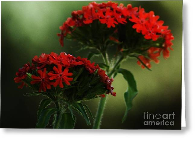 Maltese Cross Greeting Card by Christopher Mace