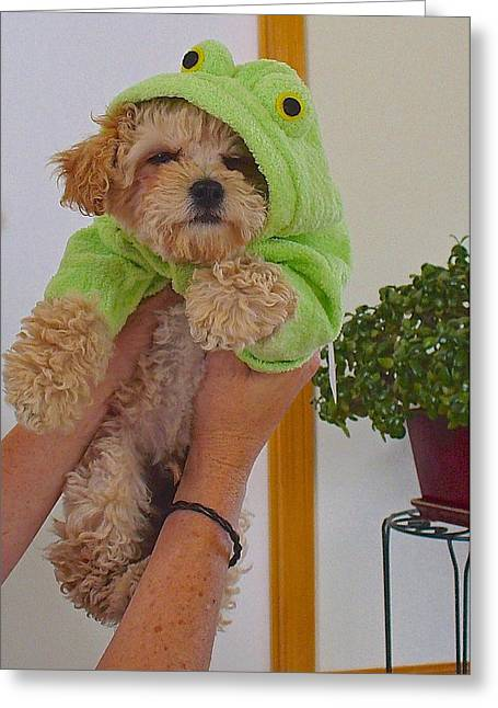 Greeting Card featuring the photograph Malti-poo Frog A True Mongrel by Brenda Pressnall