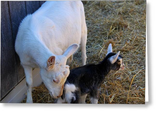 Mama And Baby Greeting Card by Carolyn Ricks