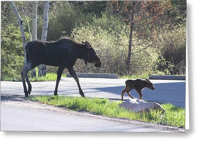 Mama And Baby Moose Greeting Card