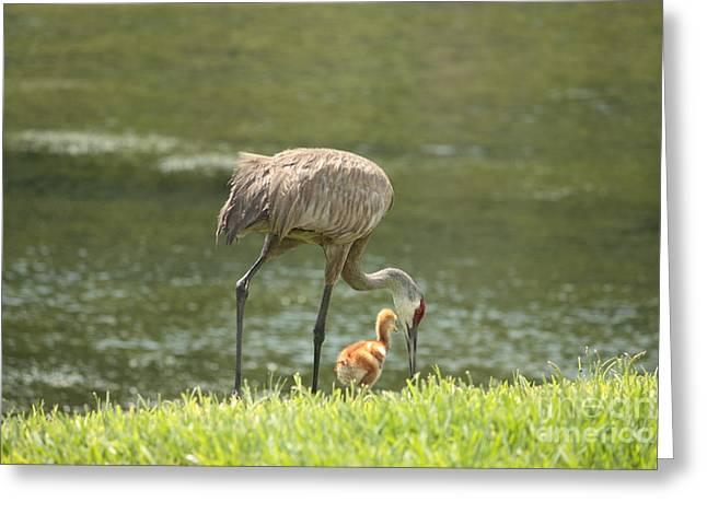 Mama And Chick Greeting Card