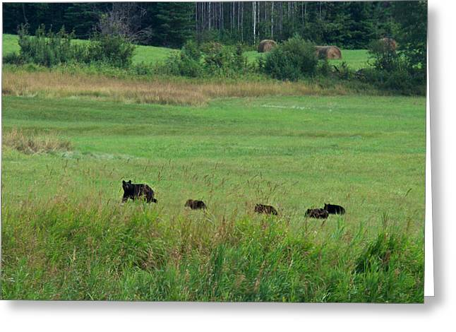 Mama Bear And 4 Cubs Greeting Card by Mary Lee Dereske
