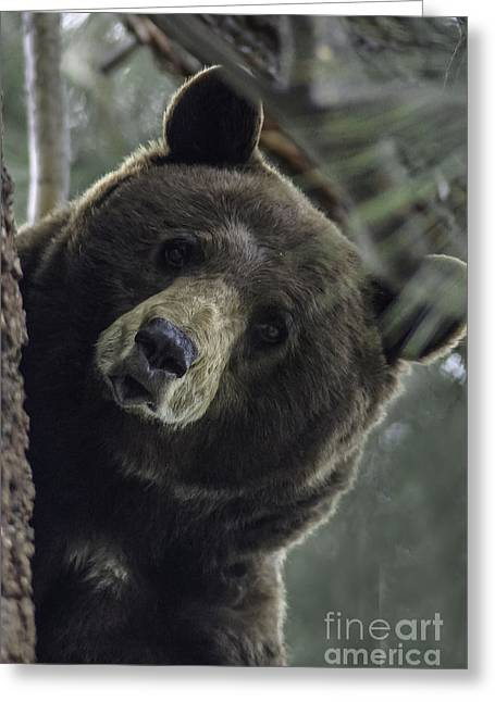 Mama Bear Greeting Card by Mitch Shindelbower