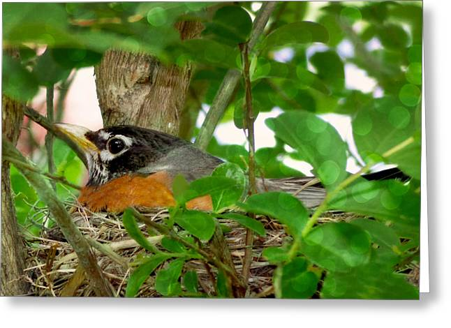 Greeting Card featuring the photograph Mama Bird by Melissa Messick