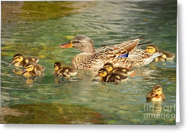 Mama Duck And Her Babies Greeting Card by Eva Kaufman
