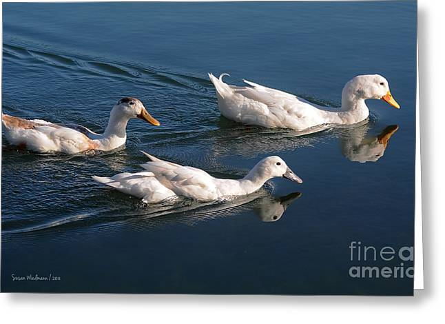 Mama Duck Leads The Way Greeting Card
