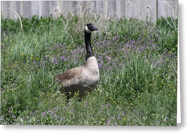 Mama Goose Greeting Card by Kelsey Walks