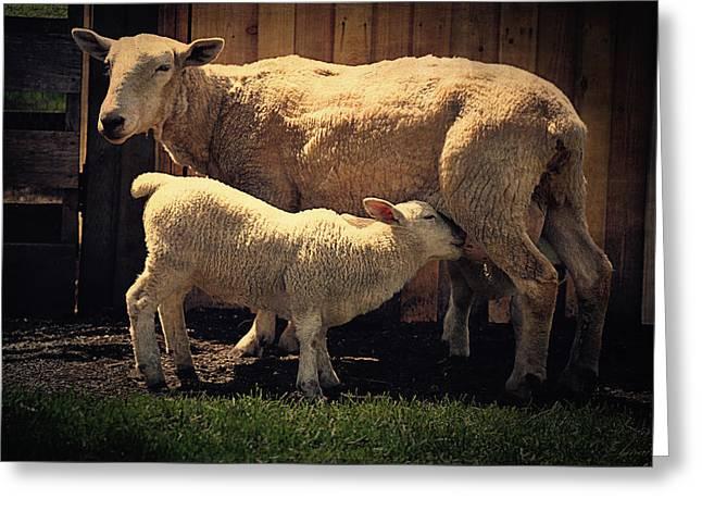 Mama Sheep And Baby Lamb Greeting Card by Maria Angelica Maira