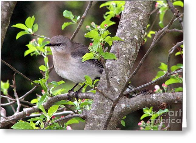 Mama's Gonna Buy You A Mockingbird Greeting Card by Benanne Stiens