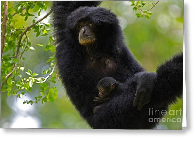 Mamas Hammock Greeting Card by Ashley Vincent