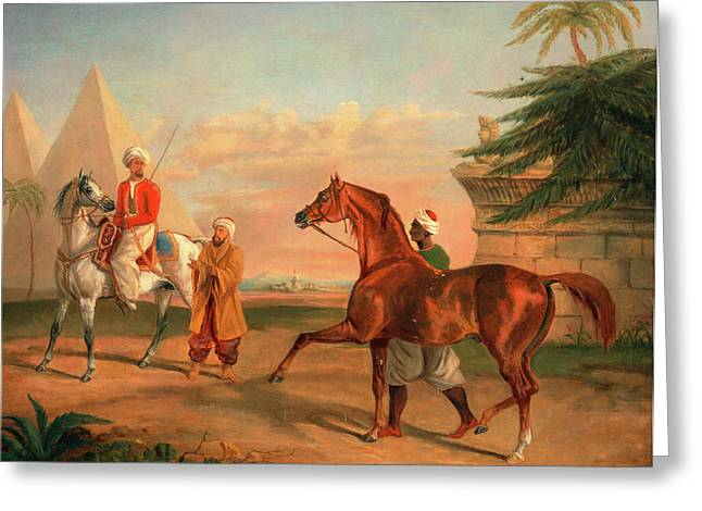Mameluke Purchasing An Arabian Stallion A Mameluke Greeting Card