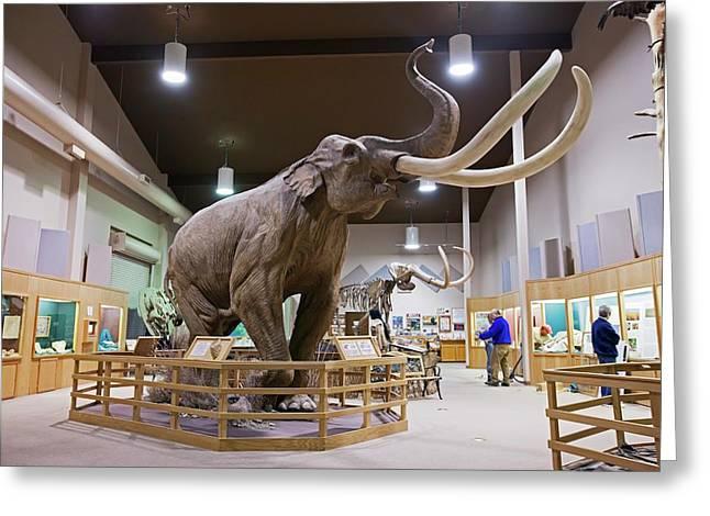 Mammoth Exhibit Greeting Card