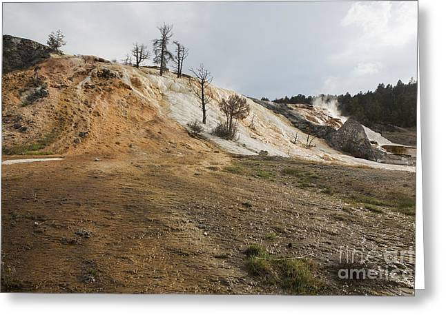 Greeting Card featuring the photograph Mammoth Hot Springs by Belinda Greb