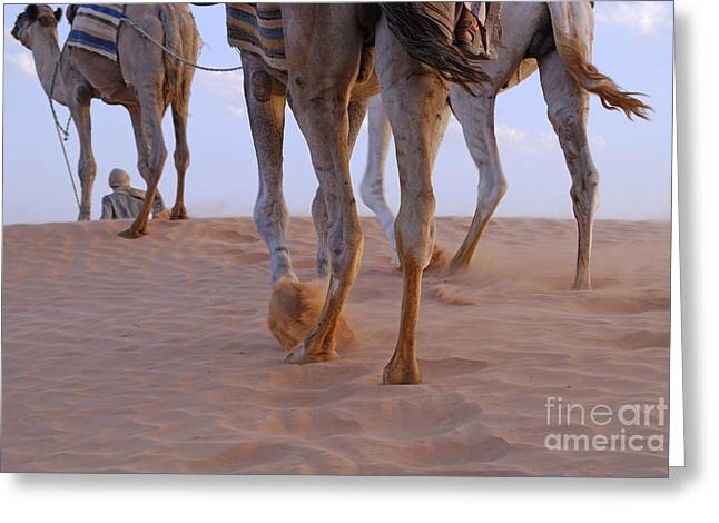 Man With Three Camels By A Sand Dune Greeting Card by Sami Sarkis