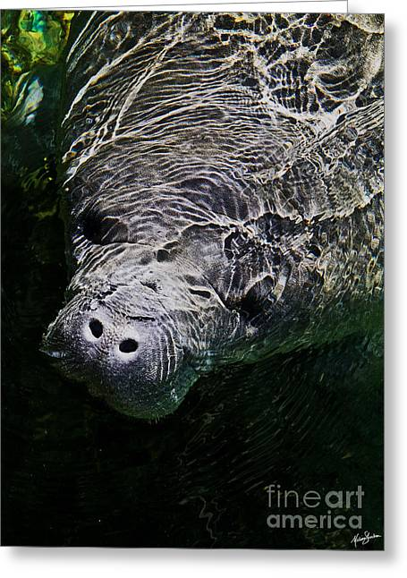 Manatee 01 Greeting Card