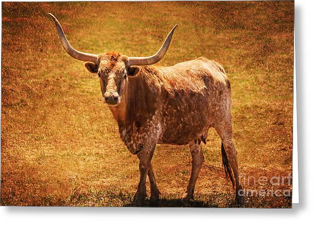 Mancos Colorado Longhorn Cattle Greeting Card by Janice Rae Pariza