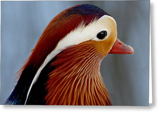 Greeting Card featuring the photograph Mandarin Duck by Bob and Jan Shriner