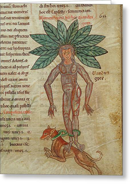 Mandrake Chained To Dog Greeting Card by British Library