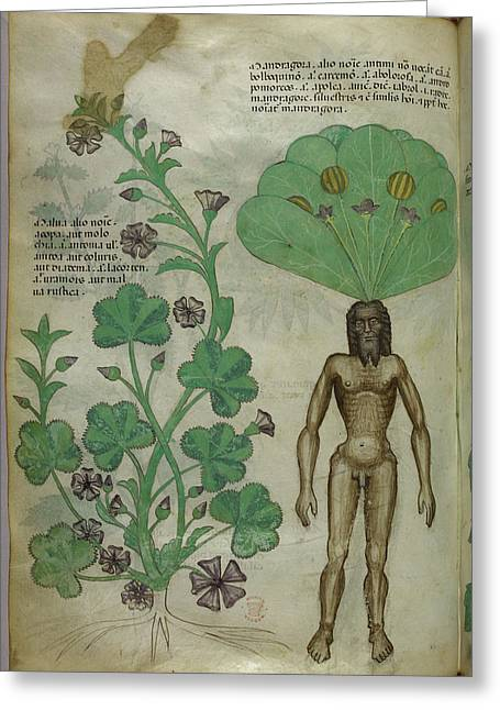 Mandrake Plant Greeting Card