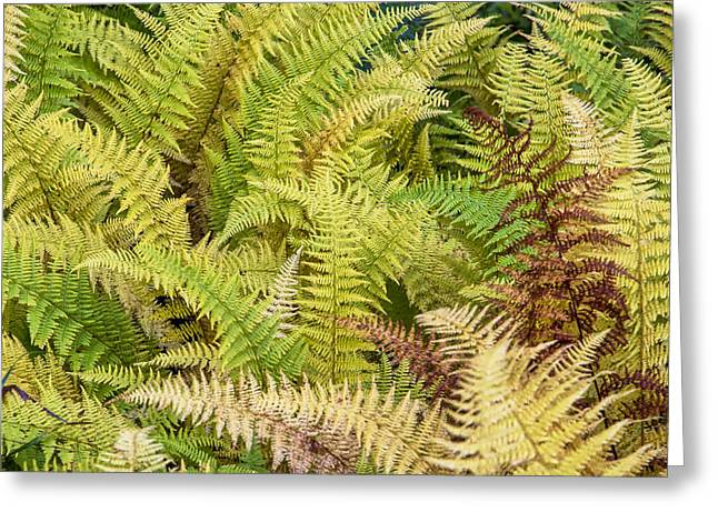 Mane Fern Greeting Card