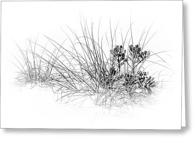 Mangrove And Sea Oats-bw Greeting Card by Marvin Spates