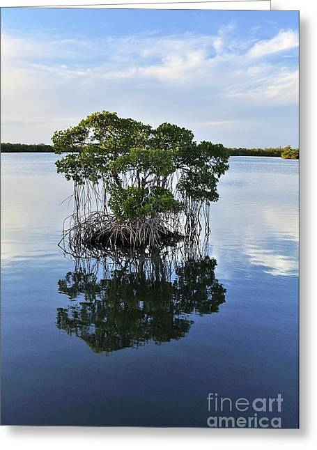 Mangrove Island Greeting Card by Andres LaBrada