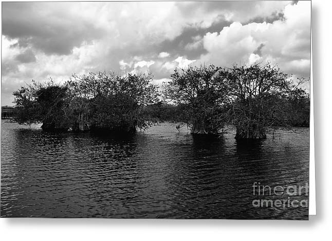 Mangrove Islands Greeting Card by Andres LaBrada