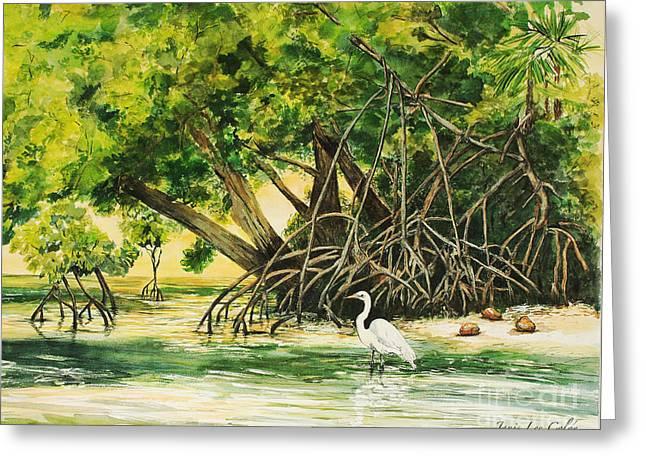 Mangrove Morning Greeting Card