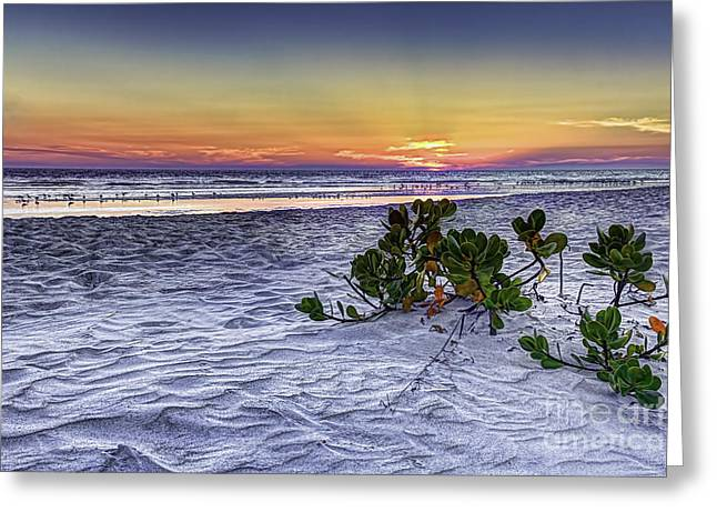 Mangrove On The Beach Greeting Card